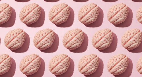 cerveau sexe homme femme